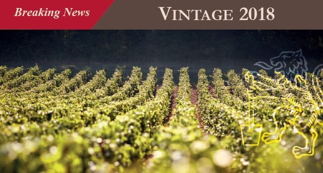 Breaking news : 2017 vintage !